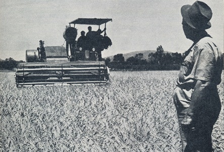 Throughout apartheid the National Party took pride in the fact that they provided 'the cheapest bread in the world'; here a farmer looks on as his crop is harvested, the beginning of the wheat-to-bread commodity chain. Western Cape, South Africa, 1959.     From, a political publication entitled 'Die Toekoms' (The Future), by M.P.A Malan, Inligtingsdiens van die Nationale Party (Information Service of the National Party), Johannesburg (1966).